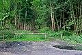 Stapleford Woods - geograph.org.uk - 439626.jpg