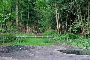 Stapleford, Lincolnshire - Stapleford Woods