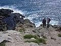 Starr-050404-0014-Eleusine indica-habit with Ken and Forest-Mokeehia-Maui (24647898741).jpg
