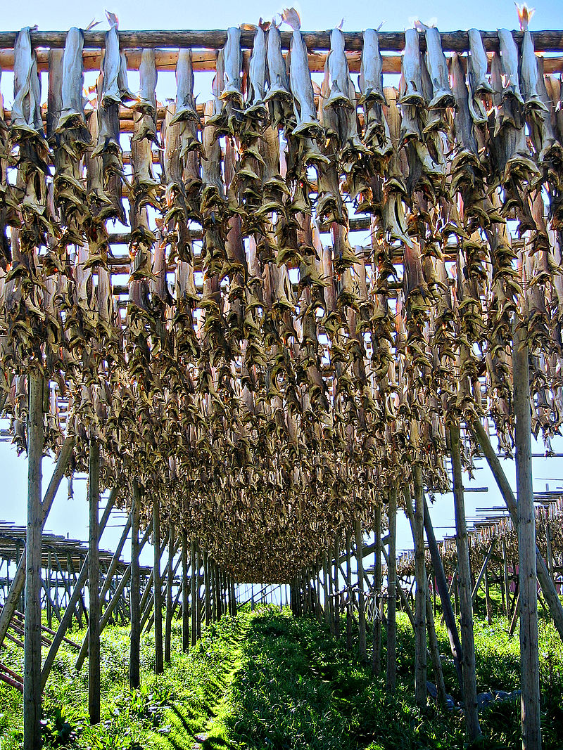 Stockfish in Lofoten.jpg