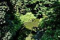 Stream - panoramio (9).jpg
