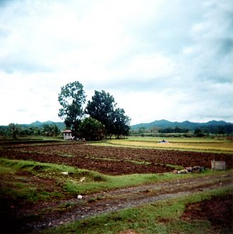 Antique (province) - A sugarcane field in Sibalom