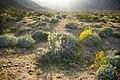 Sunny desert (13496355395).jpg
