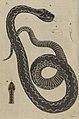 Svensk zoologi vol I 1806 037.jpg