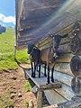 Swiss Goats in Gstaad.jpg