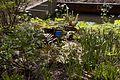 TU Delft Botanical Gardens 37.jpg