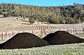 Tas de compost pour fumer le sol.jpg