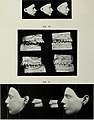 The Dental cosmos (1912) (14582667757).jpg