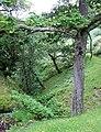 The Gorge, Nant Lluest Fach, Cwm Doethie, Ceredigion - geograph.org.uk - 511235.jpg