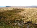 The Otterburn ranges seen from Bushman's road - geograph.org.uk - 655805.jpg
