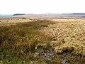 The Otterburn ranges seen from Bushman's road - geograph.org.uk - 655805.jpg