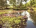 The Pool, Highgate Common - geograph.org.uk - 102726.jpg