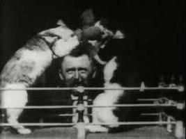 Файл:The boxing cats (Prof. Welton's).ogv