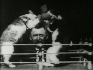 File:The boxing cats (Prof. Welton's).ogv