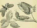 """The transformations (or metamorphoses) of insects (Insecta, Myriapoda, Arachnida, and Crustacea) - being an adaptation, for English readers, of M. Émile Blanchard's """"Metamorphoses, moeurs et instincts (14784366172).jpg"""