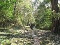 Thekkady Forest Trek.JPG