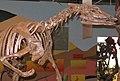 Thescelosaurus skeleton.jpg