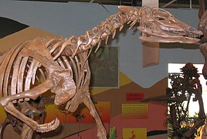 Rocky Mountain Dinosaur Resource Center - Head and arms of Thescelosaurus