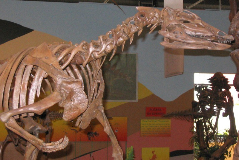 Thescelosaurus skeleton