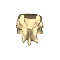 Thoracic vertebra 12 close-up posterior surface.png