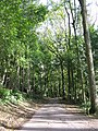 Through the woods to Lower Brockhampton - geograph.org.uk - 1019149.jpg