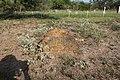 Thurber Cemetery (35956273073).jpg