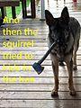 Tig the Squirrel Hunter.jpg