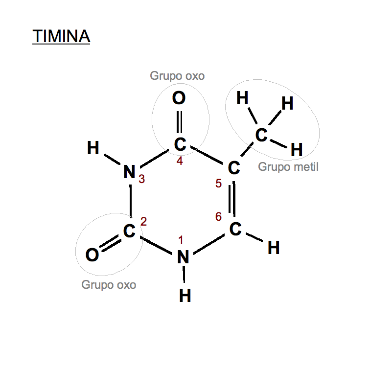 Timina