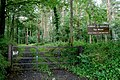 Top Wood near Portglenone - geograph.org.uk - 515169.jpg