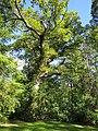 Træ Forstbotanisk Have.jpg