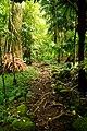 Trail to Aihualama Falls (5170650129).jpg