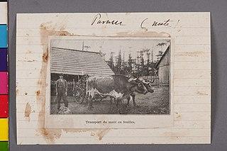 Transport du Maté En Feuilles - Paraná