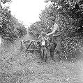 Transport van sinaasappelen per ezelwagen op een citrusplantage bij Pardes, Bestanddeelnr 255-1227.jpg