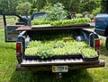 Transporting plants (5825143162).jpg