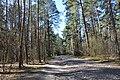 Treblinka. Droga do bramy na teren obozu.jpg