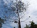 Tree (372290918).jpg