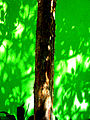 Tree Green (2709687172).jpg