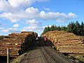 Tree Harvest, Wark Forest - geograph.org.uk - 119534.jpg