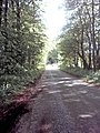 Tree lined road. - geograph.org.uk - 451423.jpg