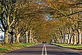 Tree lined road to Kingston Lacy - geograph.org.uk - 292525.jpg