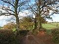 Tree sentinals - geograph.org.uk - 1589160.jpg
