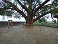 Tree shrine near buffalo arena 01.jpg