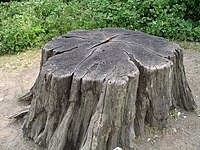 Tree stump1 30u06.JPG