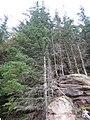 Trees and Rocks - geograph.org.uk - 589261.jpg
