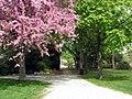 Trees in Jackson Park, Windsor (4546316655).jpg