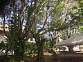Trees live (24506709547).jpg