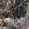 Trichterspinne Netz2.jpg