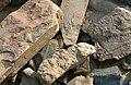 Trilobite Beds fossils.jpg