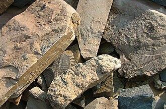 Mount Stephen trilobite beds - A high density of trilobites are present at the trilobite beds.