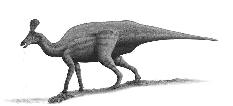 Tsintaosaurus-spinorhinus-steveoc86